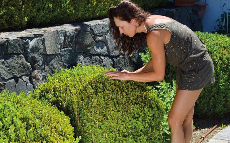 Auf natürliche Weise die Pflanzen im Garten stärken