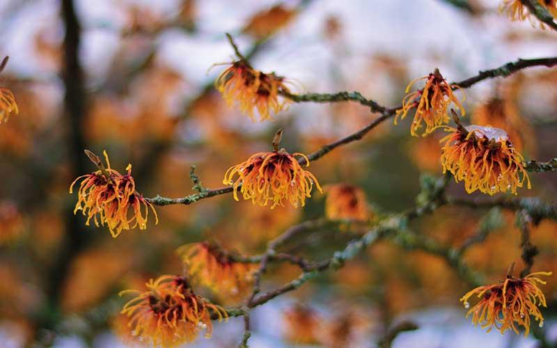 Freude am attraktiven Garten – auch im Winter