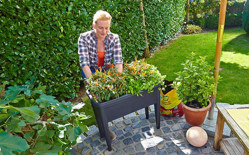 Gemüse und Kräuter auf kleinstem Raum anbauen